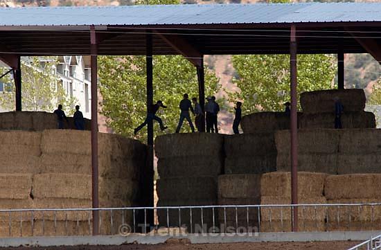 Boys leaping on hay bales, Colorado City<br />