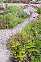 Ferns, stone pebble path walkway rock garden plants