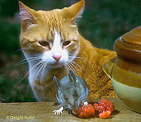 CT01-004p  Cat - watching mouse eat berries in the kitchen