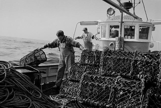 The crabber 'William Harvey'.<br />