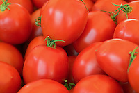Farm-fresh produce fresh, fruits, vegetables, Tomatoes, savory, red, edible fruit,  (Solanum lycopersicum)