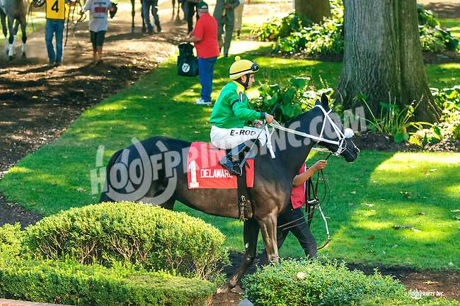 Royal Jewely before The Winter Melody Stakes at Delaware Park on 9/14/16