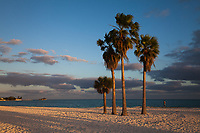 Palm Trees, Sombrero Beach, Vaca Key, Marathon, Florida Keys, FL, America, USA.