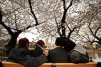 Friends under the cherry blossom, Ueno Park, Tokyo, Japan, April 3, 2010.