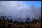May 27th 2001. Residents of Groveland watch a wildfire in their own back yards. Groveland was once an area of orange groves.