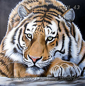 Sandi, REALISTIC ANIMALS, REALISTISCHE TIERE, ANIMALES REALISTICOS, paintings+++++,USSN43,#a#, EVERYDAY ,tiger,tigers, ,puzzles