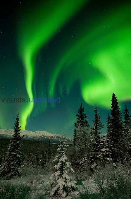 Aurora Borealis or Northern Lights under moonlight, Alaska, USA.