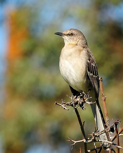 Bird sitting on a branch in El Centro, California