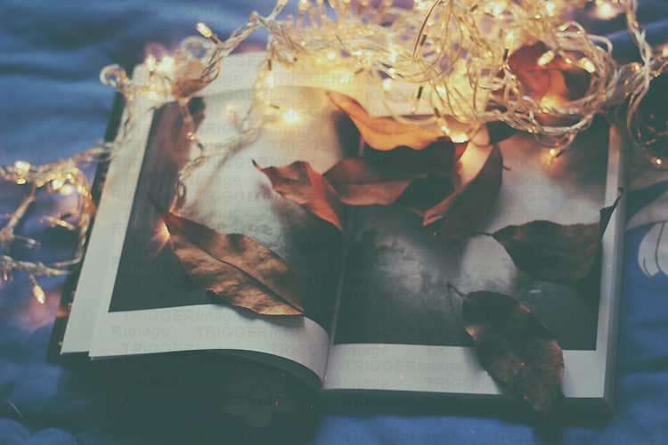 Photography of an open book with atuumn leaves and christmas lights.