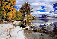 Lakeshore of the Lake Wakatipu near Queenstown in autumn colours - Otago