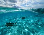 BORA, BORA - NOVEMBER 30:  during the Bora Bora IRONMANA in Bora Bora, Tahiti on November 30, 2016. (Donald Miralle)