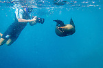 Snorkeling with sea lions at Champion Islet near Floreana Island, Galapagos National Park, Galapagos, Ecuador