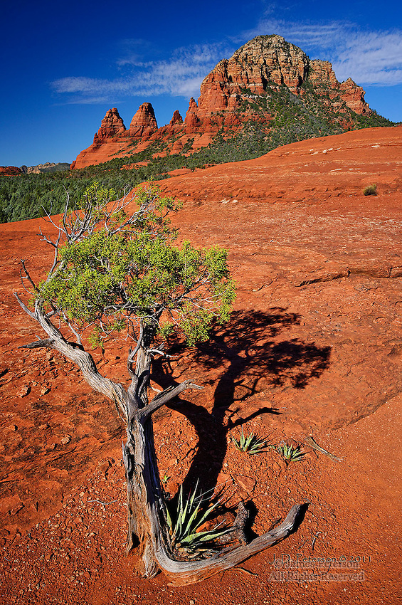 Juniper and Yuccas on Submarine Rock, near Sedona, Arizona.  Available in sizes up to 30 x 45 inches.