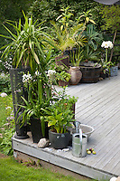 Outdoor lighting in woven lanterns, different plant containers and small water features are all combined on the terrace, creating areas of dence, lush greenery