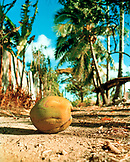 USA, Hawaii, Laie, a coconut lies in the middle of a dirt road, the North Shore of Oahu