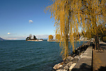Weeping willow tree on a spring day, Clarens, Lake Léman close to Montreux, Switzerland.