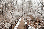 Seen on a walk along the Saugerties Lighthouse trail in Saugerties, NY on Frisday, March 10, 2017. Photo by Jim Peppler. Copyright Jim Peppler 2017.