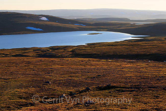 Alpine tundra habitat in Norway's arctic. Varanger Peninsula. June.