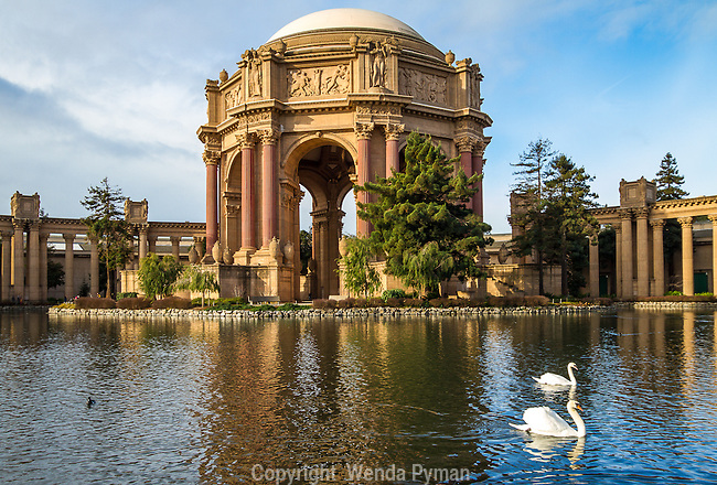 The Palace of Fine Arts, designed by Bernard Maybeck, continues to be a popular attraction for tourists and locals. A pair of swans swim in the foreground, right.
