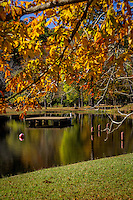 Swimming area at Shady Lake in fall.  Shady Lake is a scenic 25-acre lake in remote mountain setting in the Ouachita National Forest in Arkansas. The Civilian Conservation Corps developed the Shady Lake Recreation Area in 1937.