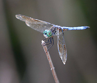 Courtesy photo/TERRY STANFILL<br />