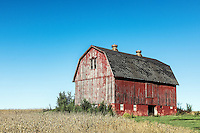 Scenic red barn and farmland, Scottsville, New York, USA.