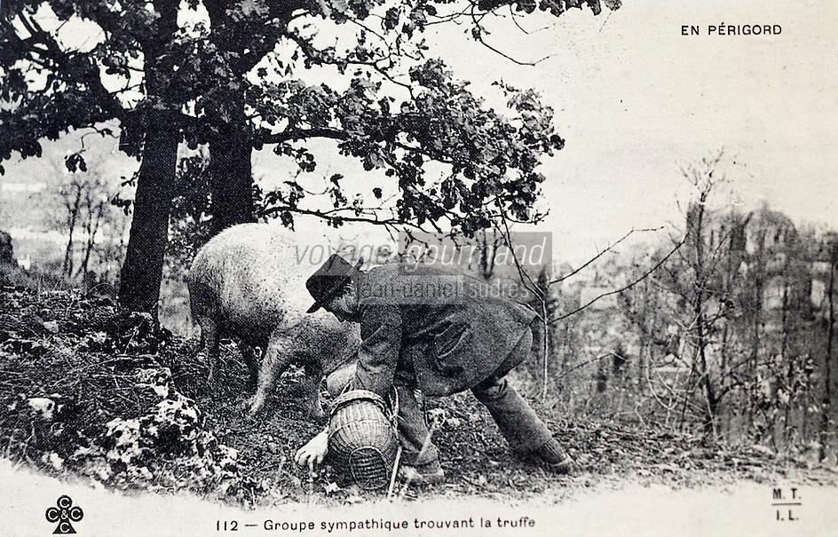 Europe/France/Aquitaine/24/Dordogne/Sorges: Musée de la Truffe, Sorges _ Vieille carte postale: Recherche de la Truffe - Le Cavage _ Reproduction - Collection:  Musée de la Truffe, Sorges