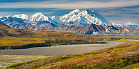 Red bearberry covers the tundra, Denali and the Alaska Range mountains border the Mckinley River Bar, Denali National Park, Alaska.