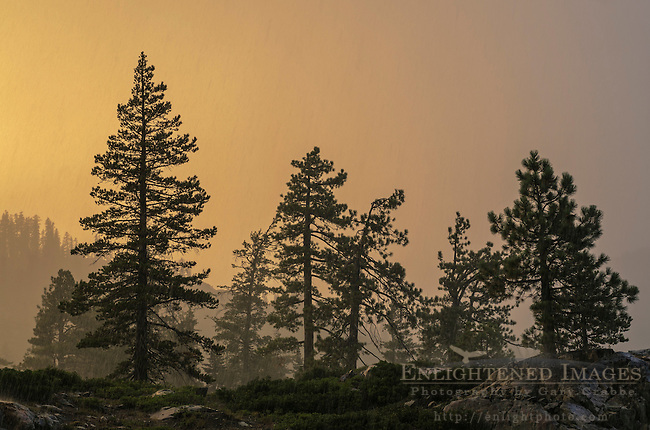 Sunset light through thunderstorm clouds and rain downpour, Tahoe National Forest, Sierra County, California