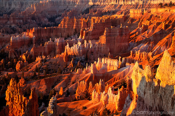 Morning light on hoodos in Bryce Canyon.