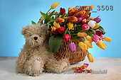 Carl, CUTE ANIMALS, teddies, photos, tulips, teddy(SWLA3508,#AC#)