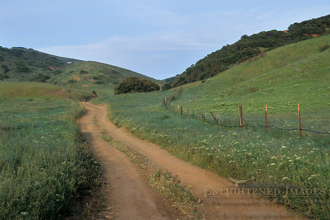 Dirt road and fence in green grass field below hills in spring, Santa Cruz Island, Channel Islands, California