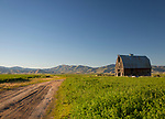 Idaho, South Central, Camas County, Fairfield. An old barn in a field of alfalfa in evening light of late spring.