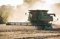 63801-07406 Soybean harvest with John Deere combine in Marion Co. IL