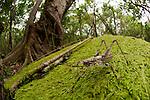 Grasshopper with long antennae in Daintree Rainforest.