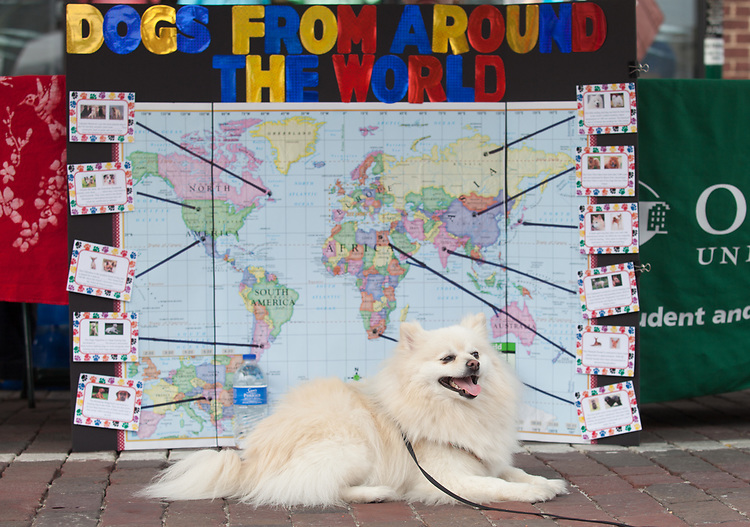 "Hensley, a pomeranian, poses for a photo in front of a ""Dogs from Around the World"" poster at the International Street Fair on Saturday April 15, 2017. Photo by Kaitlin Owens"