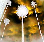 Art Palms