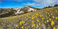 After a 2.5 mile hike up about 2000 vertical feet, you can reach this point along the Continental Divide. After exiting a boulder field, you find yourself atop this ridge, and if you time it right in the summer, you'll have Colorado wildflowers blanketing the slopes. These sunflowers greeted me on an early July morning.