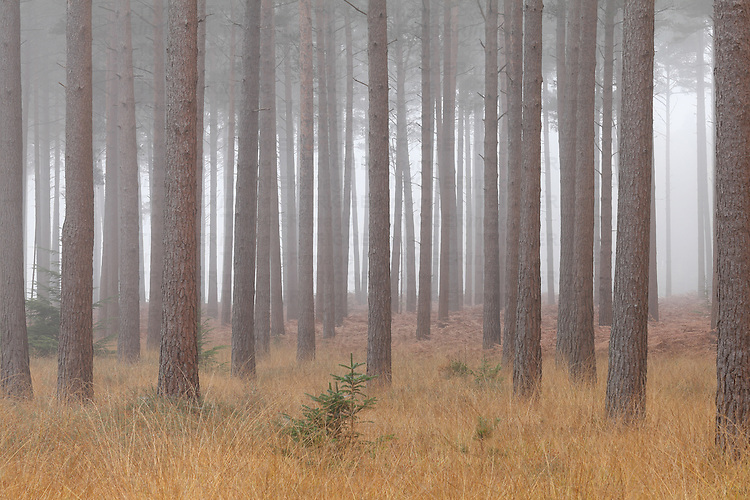 Misty countryside with forest