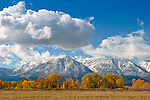 Fall Colors 2010 and snow in mountains Carson Valley and Minden Gardnerville area looking towards Job's peak.