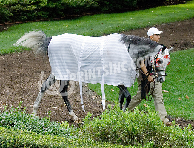 Idle Talk before The Forever Together Stakes at Delaware Park on 9/1/12