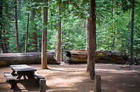 The Big Trees State Park in Calaveras County showing off the giant sequoia trees