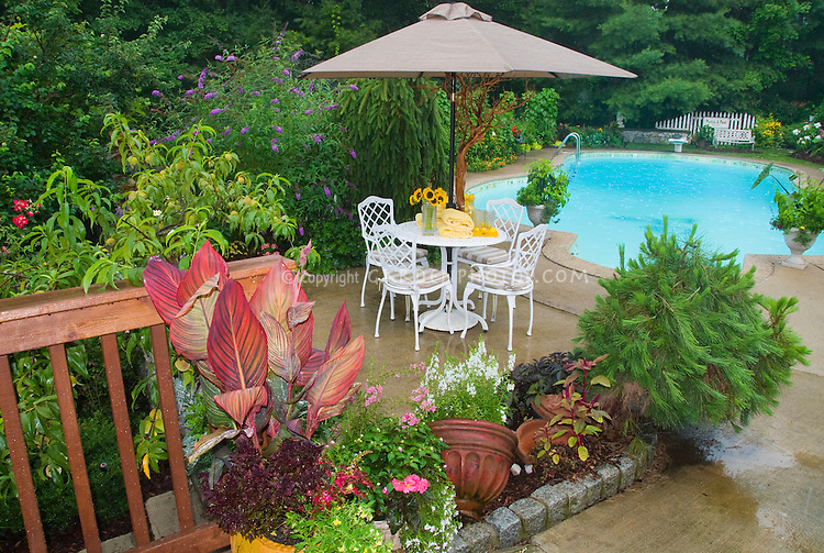 Poolside Patio garden with containers, patio furniture, tropical canna, Buddleia butterfly bush, peach tre