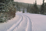 Car tracks in fresh snow, Colorado