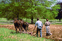 A traditional 19th Century horse-drawn plowing technique.
