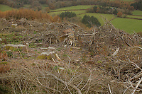 Cut down dead trees and branches in Llangammarch Wells, Powys, Wales, UK