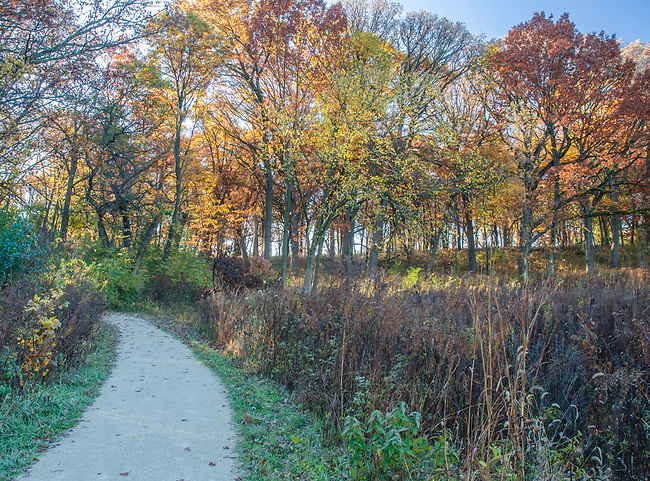 Autumn colors light up a morning forest and trail at Oldfiled Oaks Forest Preserrve, DuPage County, Illinois