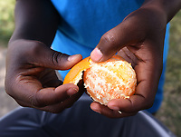 NWA Democrat-Gazette/FLIP PUTTHOFF <br />A Bentonville youngster peels an orange he received Tuesday July 3 2018 that came with a lunch distributed by First United Methodist Church of Bentonville. Several youngsters asked for second helpings of fruit during that day's lunch distribution.