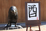 """January 3, 2017, Tokyo, Japan - 15-year-old male sea lion """"Leo"""" smiles after he wrote the word """"Rooster"""" in Chinese character as part of a New Year's attraction at the Hakkeijima Sea Paradise aquarium in Yokohama  on Tuesday, January 3, 2017. Leo wrote """"Rooster"""" to celebrate the """"Year of Rooster"""" of Chinese zodiac.  (Photo by Yoshio Tsunoda/AFLO) LWX -ytd-"""