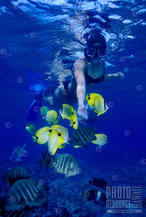 Woman snorkeling near reef fish at Hanauma bay, Oahu